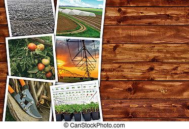 collage, foto, agricoltura