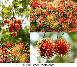 collage, frutta, rambutan