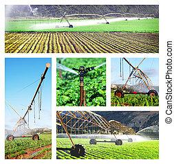 collage, immagini, irrigazione