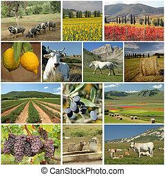 collage, industria, agricoltura, italiano