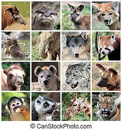 collage, mammiferi, animale