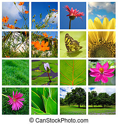 collage, primavera, natura