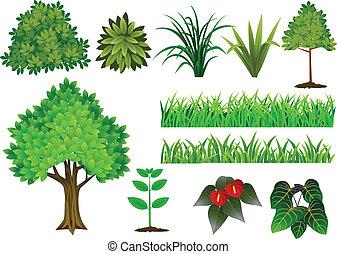 collezione, albero, pianta