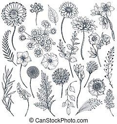 collezione, piante, mano, disegnato, fiori