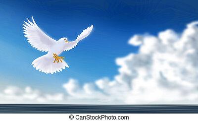 colomba, pacifico