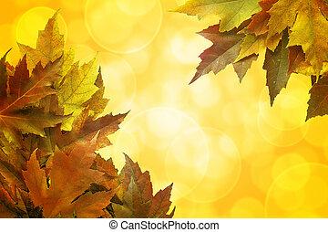 colorare, foglie, fondo, cadere, bordo, acero
