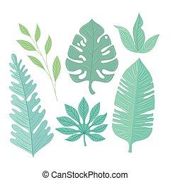 colorare, foglie, tropicale, collezione, pastello