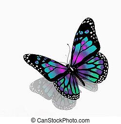 colorare, sfondo blu, isolato, farfalla, bianco