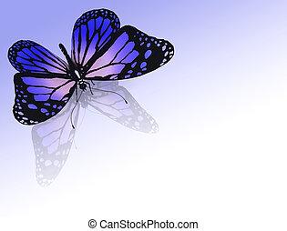 colore farfalla, fondo