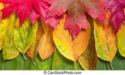 colori, fondo, cadere