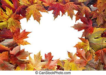 colorito, foglie, albero, cadere, bordo, acero