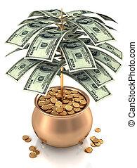 coltivare, contanti