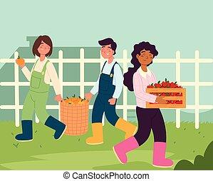 coltivatori, scegliere, mele, arance