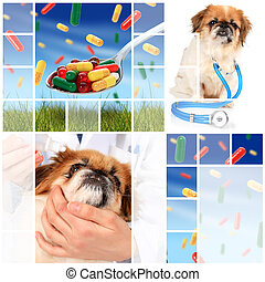 concept., veterinario