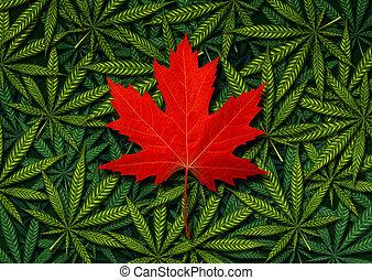 concetto, canadese, marijuana