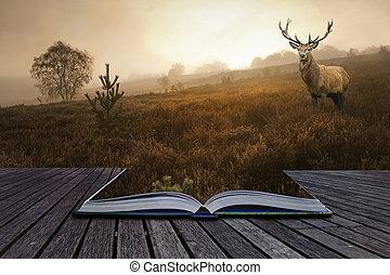 concetto, immagine, cervo, creativo, cervo, libro, rosso, venuta, nebbioso, pagine, paesaggio, fuori