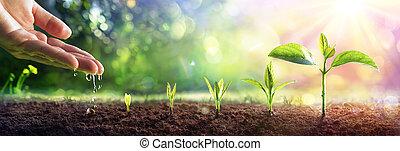 concetto, piante, bagliore, mano, crescente, -, irrigazione, giovane, effetto