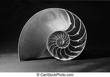 conchiglia, modello, nautilus, nero, bianco, geometrico