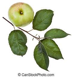 congedi verdi, albero, mela, ramo