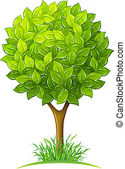 congedi verdi, albero