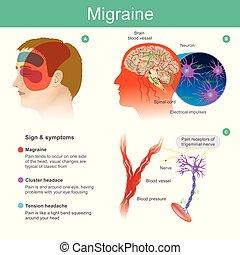 cooccur, testa, vasi sanguigni, flusso, brain., lato, pressured, illustration., dolore, ridurre, mal di testa, uno, tendere, migraine.