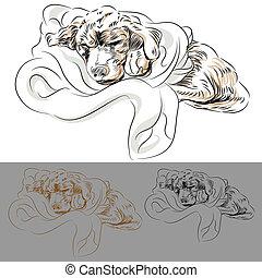 coperta, cucciolo, labrador, in pausa