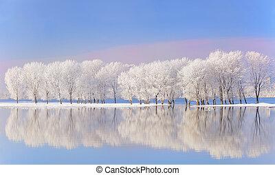 coperto, gelo, alberi inverno