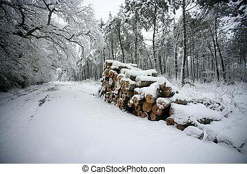 coperto, lato, registrare, strada, neve