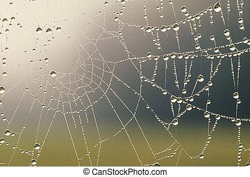 coperto, rugiada, web ragno