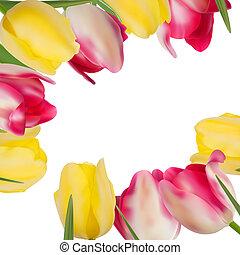 copia, formare, eps, space., tulipano, 8, fiori