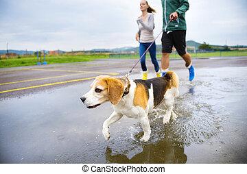 coppia, passeggiata, cane, pioggia, giovane