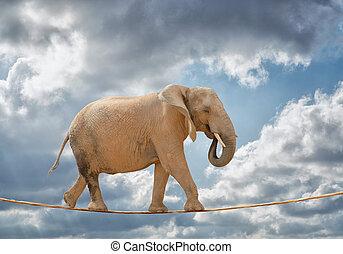 corda, camminare, elefante