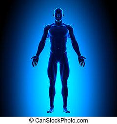 corpo, blu, pieno, conce, -, vista frontale