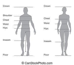 corpo, misure, diagramma, grafico, femmina, misura, maschio, abbigliamento, formato