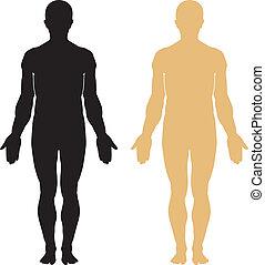 corpo, silhouette, umano