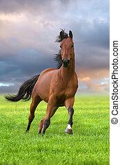 corsa, baia, verde, stallone, campo