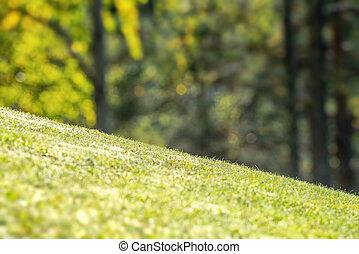 cortile posteriore, erba, vibrante, andamento di una curva grafica, verde