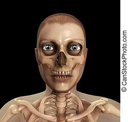 cranio, carne