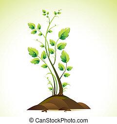 crescente, albero