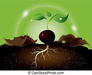 crescente, germoglio, seme, verde