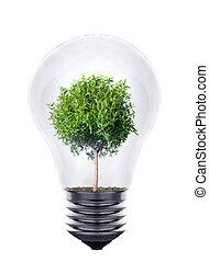 crescente, luce, pianta, dentro, bulbo
