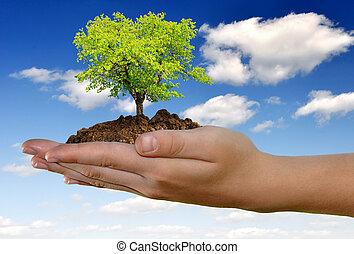 crescente, mano, albero