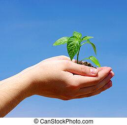 crescente, pianta, verde