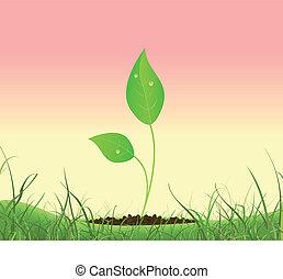 crescente, primavera, pianta, giardino