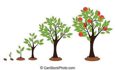 crescita, albero