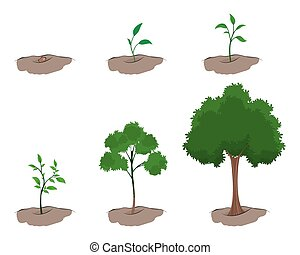 crescita, albero, palcoscenico