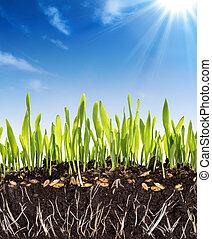 crescita, fondo, -, suolo, concetto