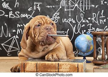 cucciolo, matita masticazione