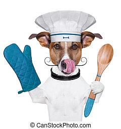 cuoco, cane, chef