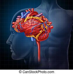 cuore, cervello